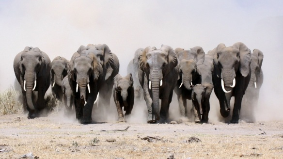 Heards of Elephants Running by Gracie Berry